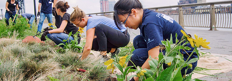 New York Cares Group Volunteers Planting Flowers