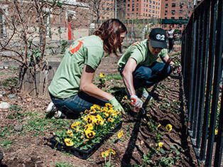 Volunteers plant flowers to beautify NYC parks for summer.